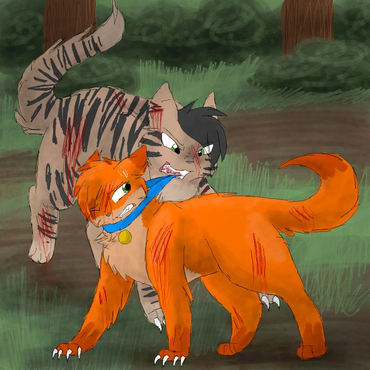 Warriors Into The Wild Movie By Erin Hunter: Longtail And Firepaw When Firepaw (rusty) Prove Himself