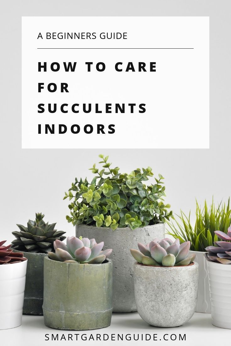 Complete Guide To Growing Succulents Indoors How To Grow And Care