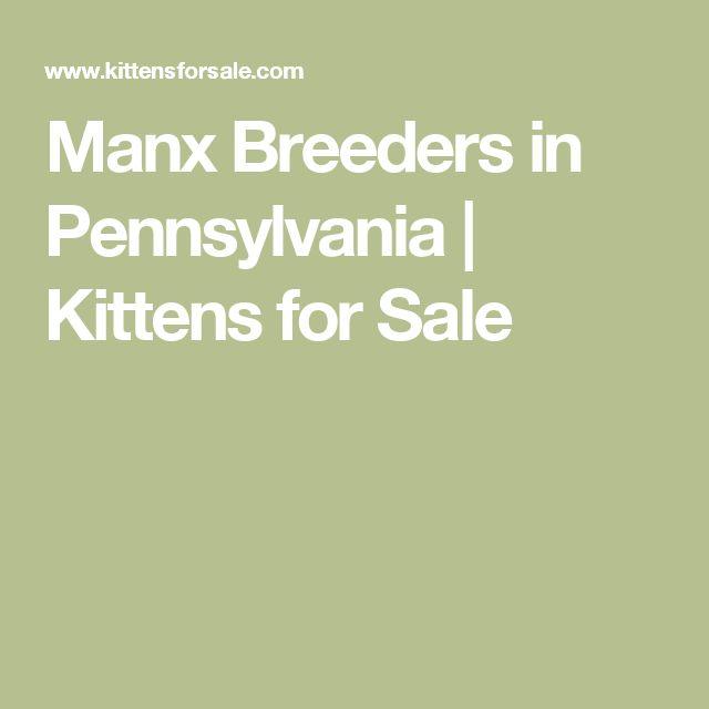 Manx Breeders in Pennsylvania | Kittens for Sale