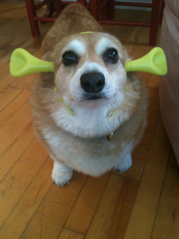 Find great deals on eBay for Corgi Costume in Unisex Theater and Reenactment Costumes. Shop with confidence.