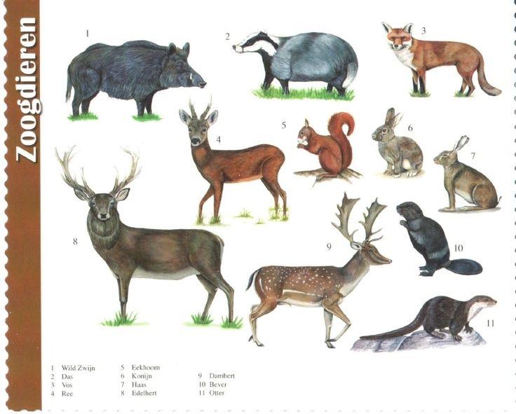 van der Meulen - forest mammals