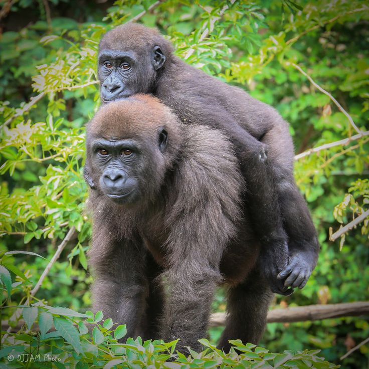 All sizes | Cincinnati Zoo 8-9-16-3086 | Flickr - Photo Sharing!