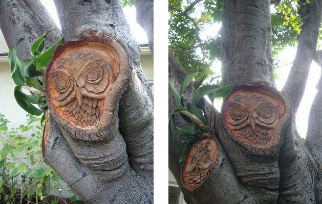 Tree owl carvings
