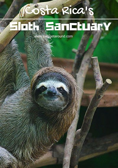 The Sloth Sanctuary Costa Rica – Up Close With The Most Amazing Creatures
