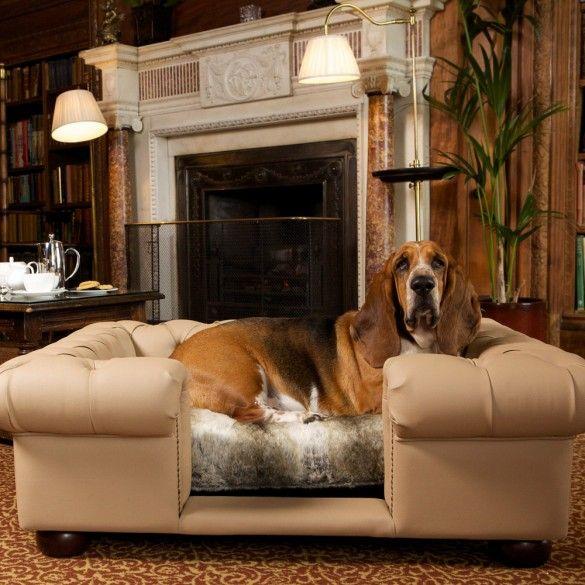 The 25 Best Dog Friendly Hotels Uk Ideas On Pinterest