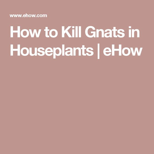 How to Kill Gnats in Houseplants   eHow