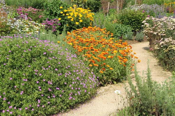 21 best Xeriscape Texas Hill Country images on Pinterest ...