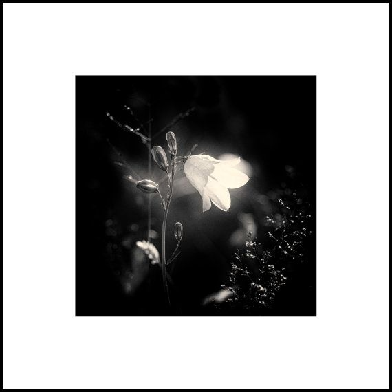 Black and White Macro Photography - Contemporary Fine Art Print - Oversized Art Print  - Minimalist Photography - Vintage Style Photograph