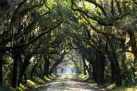 30 Lowcountry day trips you can't miss #charleston #southcarolina #lowcountry