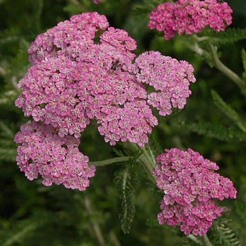 Perennial Flower Garden Ideas Pictures 311 best perennial flowers images on pinterest | plants