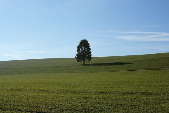 Nieuw in mijn Werk aan de Muur shop: levens boom Fotografie Sran Lifestyle