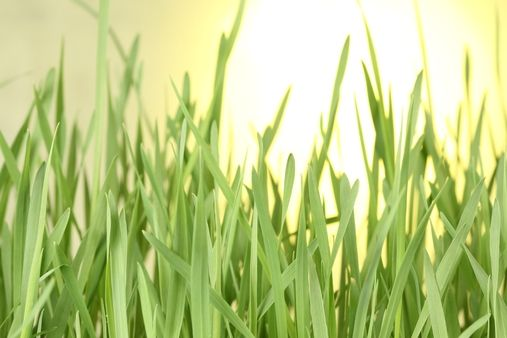 Download Free Stock Photos & Images:  - Textures, Grass Plots, Field, Plants. photo 0002984746II