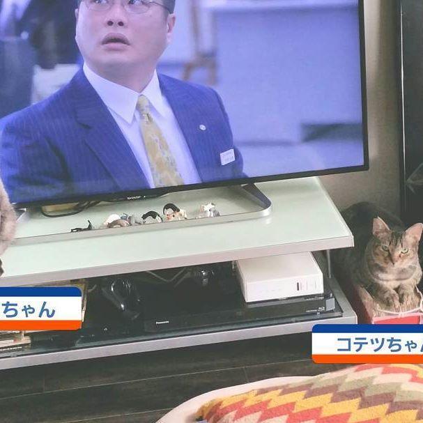 #置物 #置物ニャンコ #favoritecat#lovecats#愛猫#ネコ#猫#ネコ部#猫クラブ#小鉄#小冬#コテツ#コフユ#東京#足立区#足立区扇#ニャンコ#cat#cats