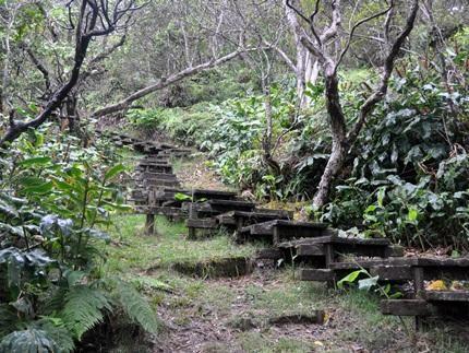 One of Many Amazing Hikes In Kauai-   Pihea Kilohana ( Alakai swamp trail) Kauai Hawaii   Kauai.com