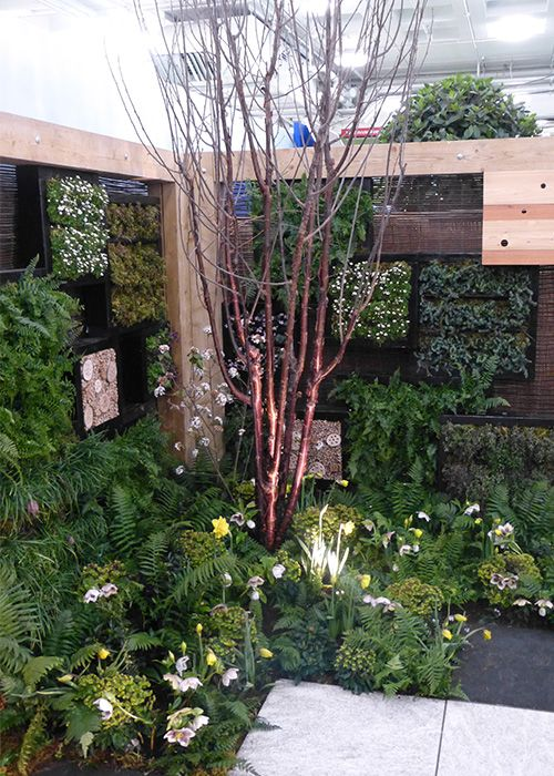 Ornamental cherry tree with stunning bark in Askham Bryan College's stunning show garden design at the Young Gardeners of the Year competition