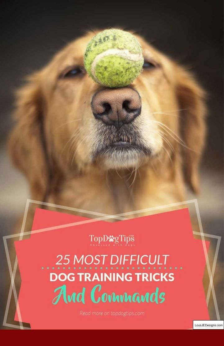Training A Dog Not To Jump And Bite And Pics Of Tips For Training