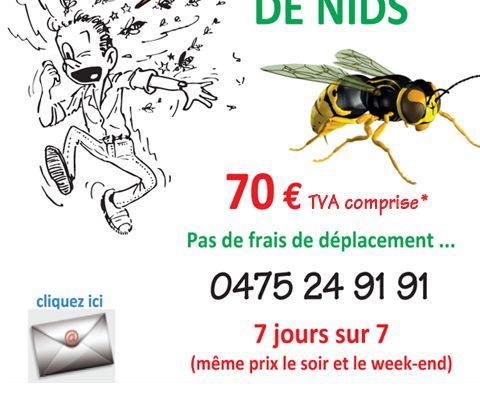 Stop aux guepes: destruction et enlevement de nids de guepes, bourdons, frelons ...