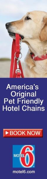 Awesome website for dog owners! Lists for pet friendly hotels, beaches, pet events, and much more!