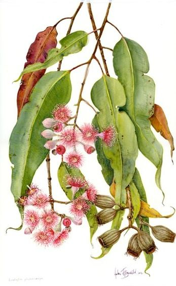 DVD 7: Botanical illustration volume 3 | Helen Fitzgerald - Botanical & Wildlife artist | Helen Fitzgerald