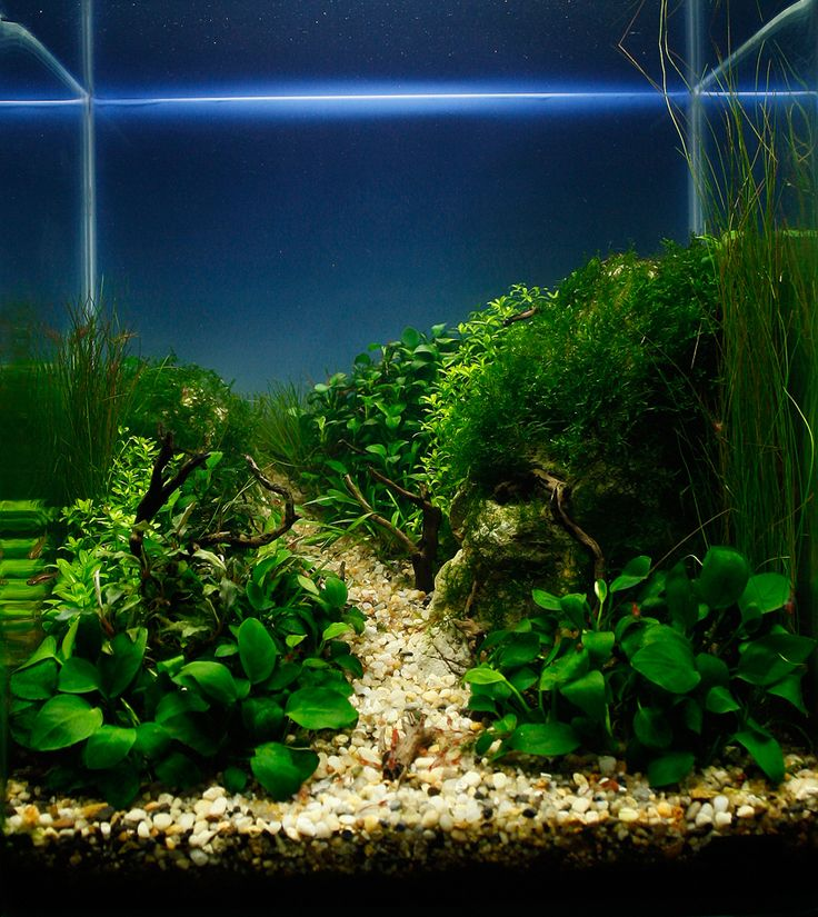 111 best images about cube aquascape ideas on pinterest for Aquarium nano cube