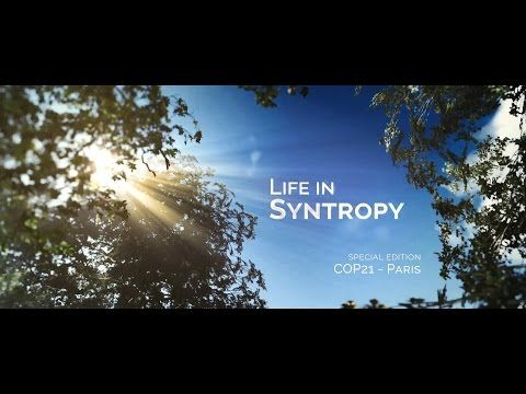 Life in Syntropy - YouTube