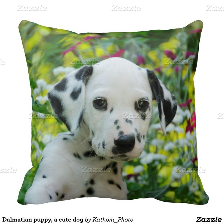 Dalmatian puppy, a cute dog pillow