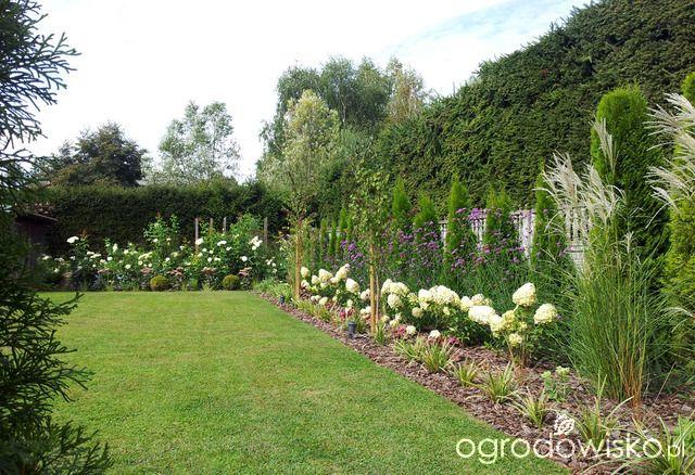 Moja codzienność - ogród Oli - strona 981 - Forum ogrodnicze - Ogrodowisko