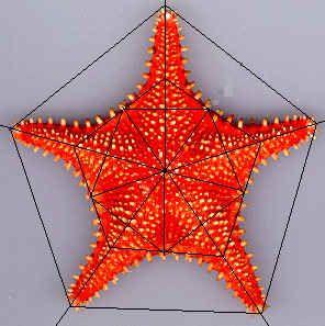 Sjøstjerne linjert.jpg (263790 bytes)