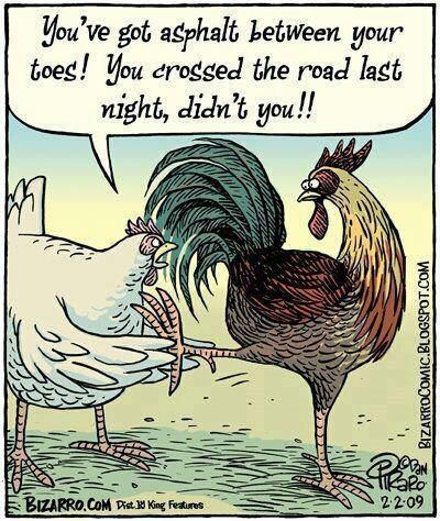 Chicken humor:  ♥ You've got asphalt between your toes! You crossed the road last night, didn't you!