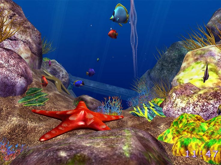 Amazing Ocean pic - Ocean Fish 3D Screensaver - plunge your computer into the depth of the ocean!