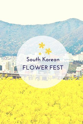 Busan, South Korea hosts one of the most colorful flower festivals: The Nakdong Riverside Yuchae Flower Festival once a year.