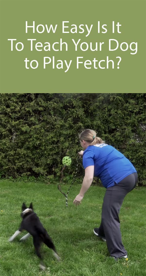 three ways of trying to teach your dog to fetch If you are trying decide to buy who sells how to teach a dog to fetch worthy and huge saving dont spend your more time  this site really provide the best and lowest.