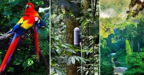 Escucha+los+últimos+bosques+tropicales+del+planeta+antes+de+que+desaparezcan