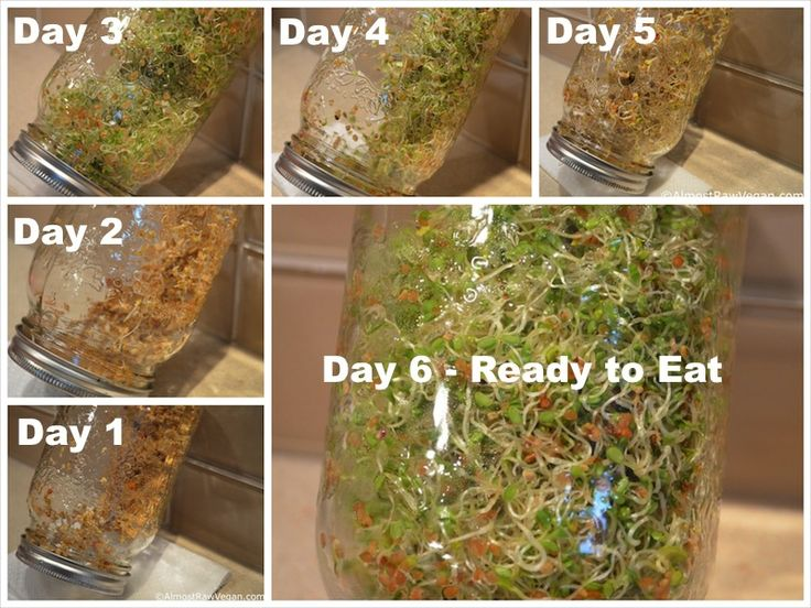 How to Make Sprouts - 6 day progression