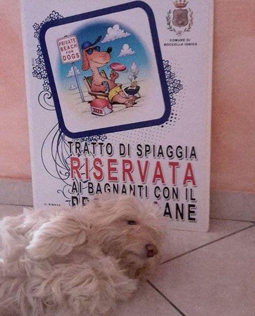spiaggia per cani in Calabria