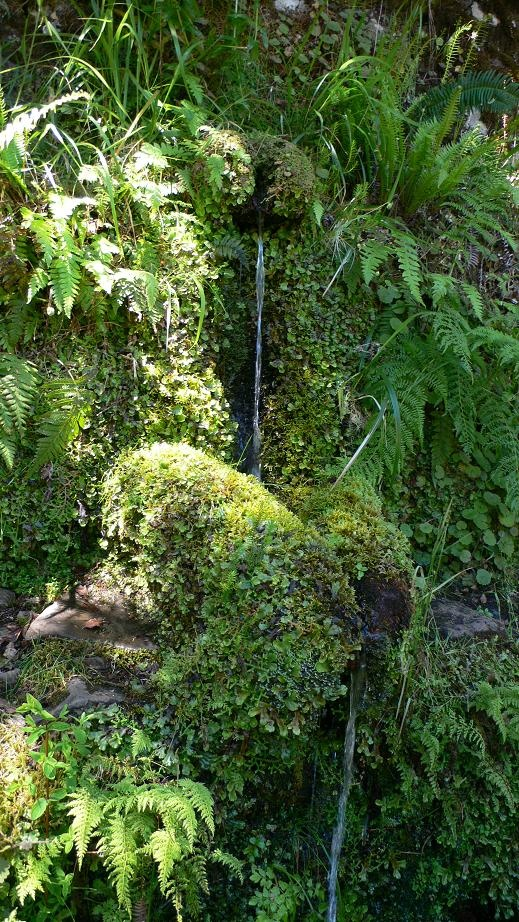 Levada's water ways in Madeira island Welcome to Madeira Islands and Enjoy Portugal Holidays