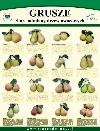 gruszki obrazy odmiany - Szukaj w Google