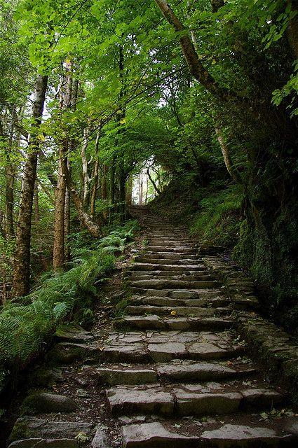 Killarney, Ireland. Stone forest path.