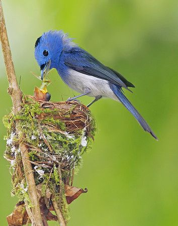 I think this is such a beautiful picture. The nest is more beautiful than any human can duplicate.