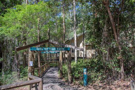 Daisy Hill Koala Centre -  etwa 25 Kilometer südöstlich von Brisbane liegt dieses Informationszentrum zum Thema Koalas. Eintritt frei.