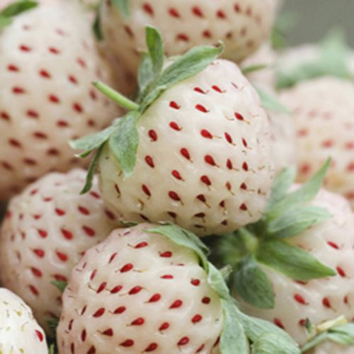 Pineberries   Juicy fruits have a more intense flavour than red strawberries, with a subtle aftertaste of pineapple