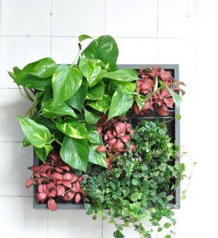 51 best vertikaler garten images on pinterest gutter garden vertical gardens and green walls. Black Bedroom Furniture Sets. Home Design Ideas
