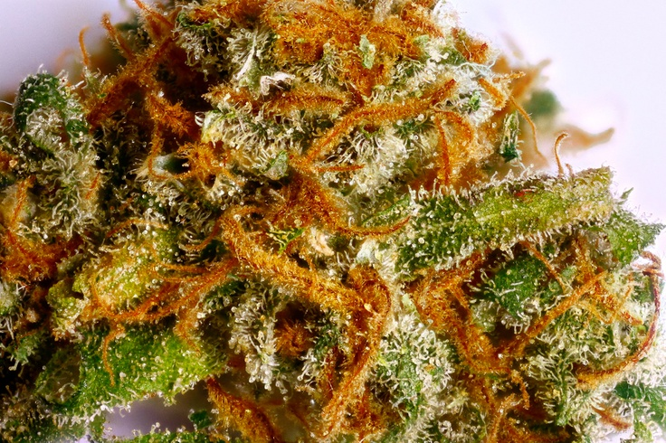 Pineapple Express (G 13 Labs) Marijuana Strain Pineapple ...