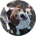Best Pet Insurance Reviews - Compare Best Pet Health Insurance Companies