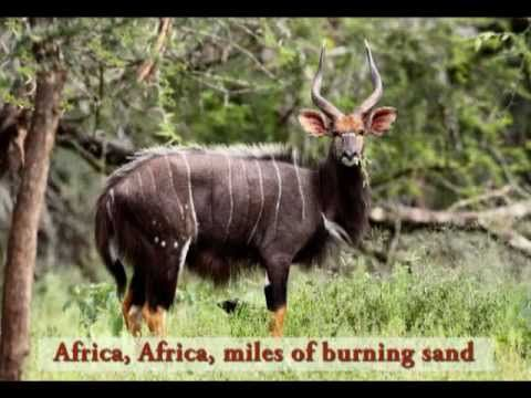 Very nice simple song about AFRICA that shows slides of all kinds of African animals and names them. (Lyrics shown)