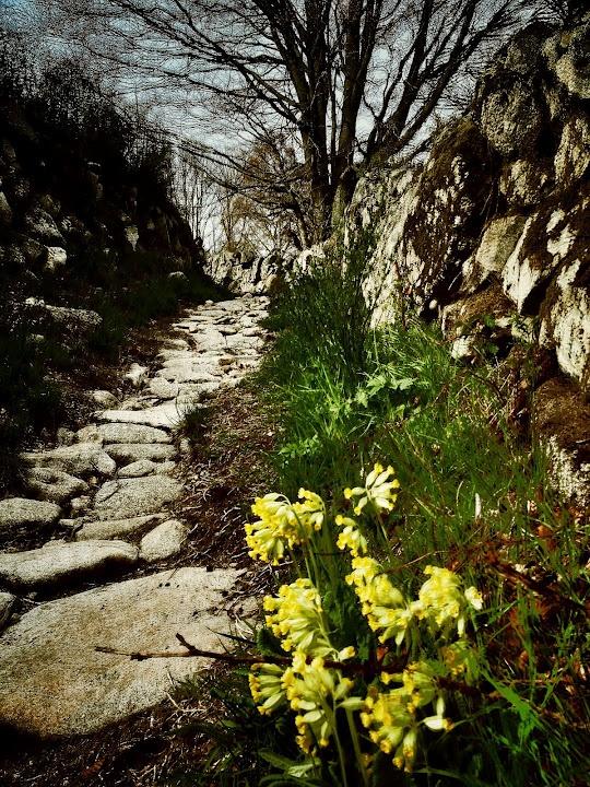 Le chemin à Pont-de-Montvert.  © Copyright Yves Philippe