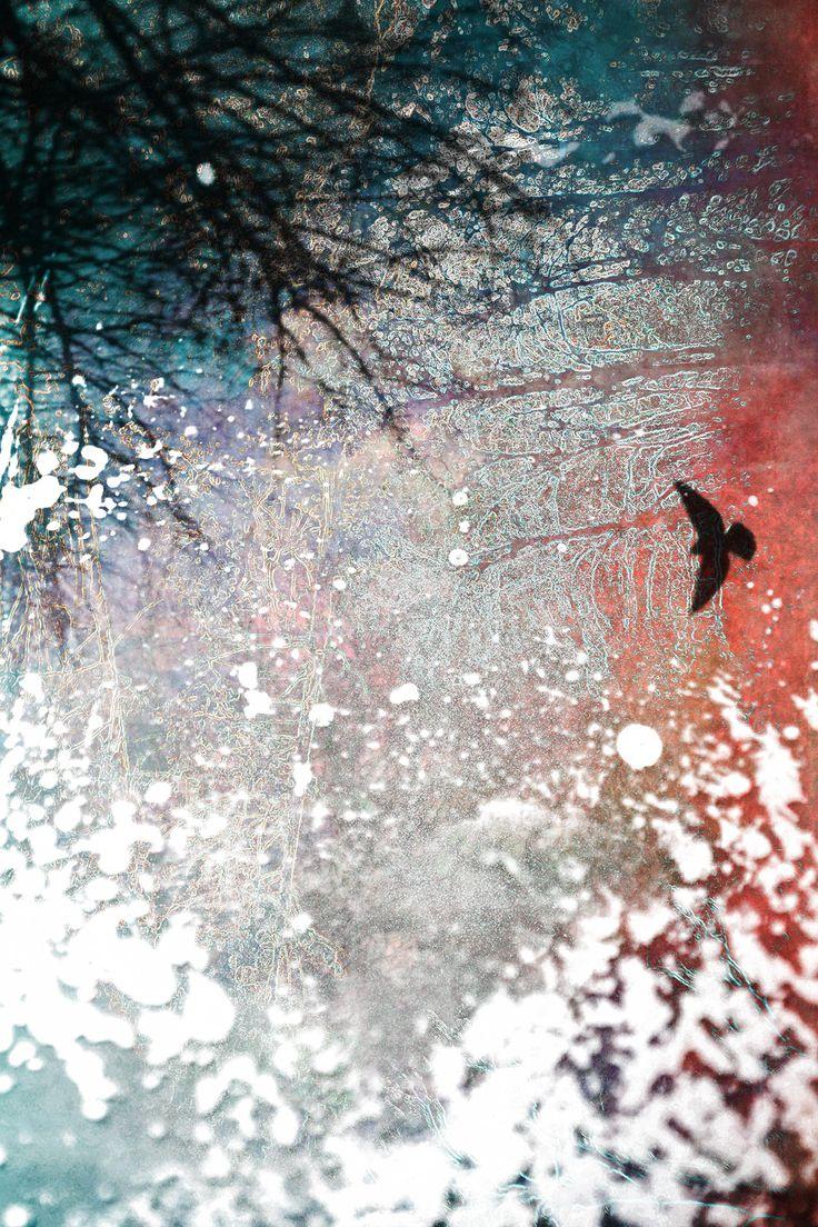 Digital Collage 2014 by Aniko Gajdocsi http://anikogajdocsi.com