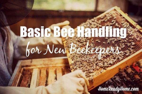 Basic Bee Handling for New Beekeepers