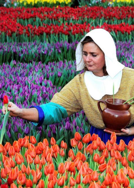 Amsterdam, Narodowy Dzień Tulipana. http://www.tvn24.pl/zdjecia/zdjecie-dnia,46897,lista.html