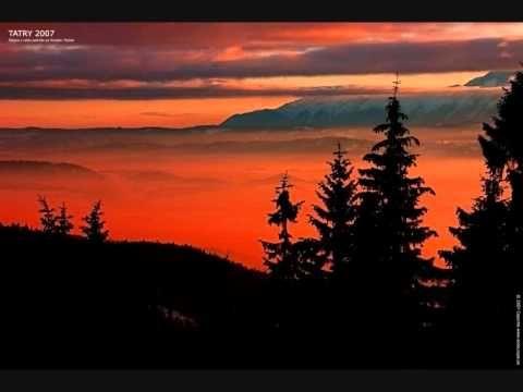 Relajacion sonidos naturaleza de las aves forestales, 100% de grabación de la naturaleza - YouTube